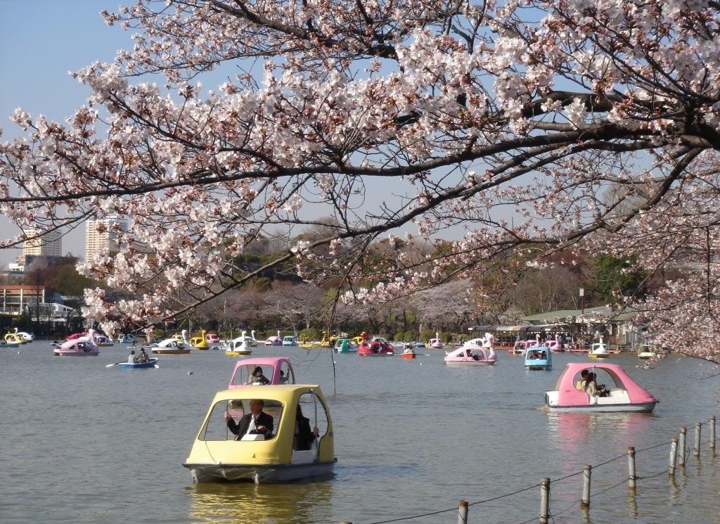 Boating in Ueno Park